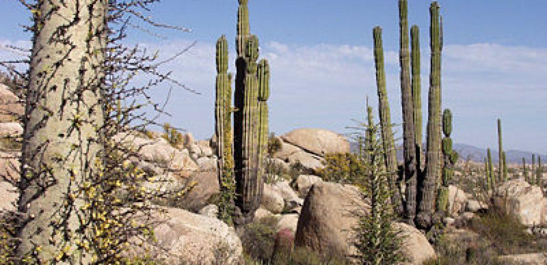 Cactus y ballenas