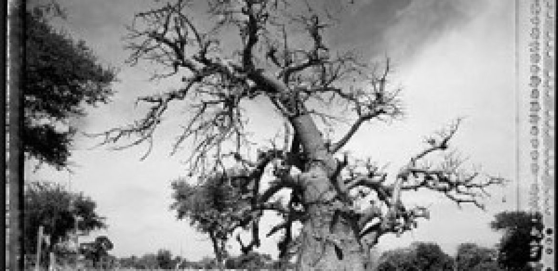 """Exposición de fotografía """"Baobab, árbol de generaciones"""""""