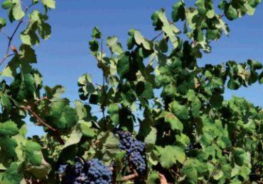 XI Seminario Mejoras técnicas en la calidad final de los vinos