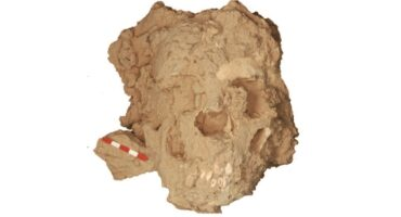 La evolución del cerebro humano y la arqueología cognitiva