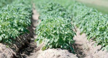 El emprendimiento verde: experiencias