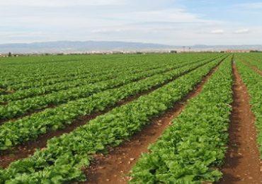 Liderar el sector agroalimentario del futuro desde la Región de Murcia