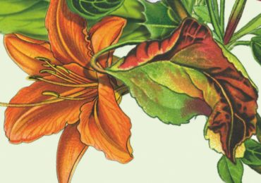 La Asociación Columbares presenta el 27º 'Festival Venagua. Arte para la inclusión'