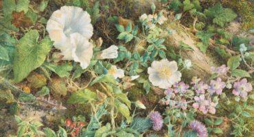 Día de la Fascinación por las Plantas