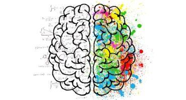 El cerebro musical: sentidos, emoción, memorias y ritmo