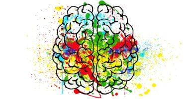 El cerebro y las efímeras emociones. Todo lo que sube baja