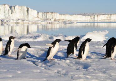 Cambio global en la Antártida: los pingüinos como indicadores